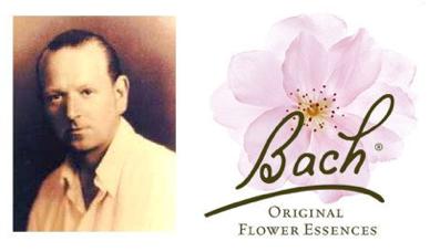 les fleurs du docteur Bach, fleurs de Bach originales