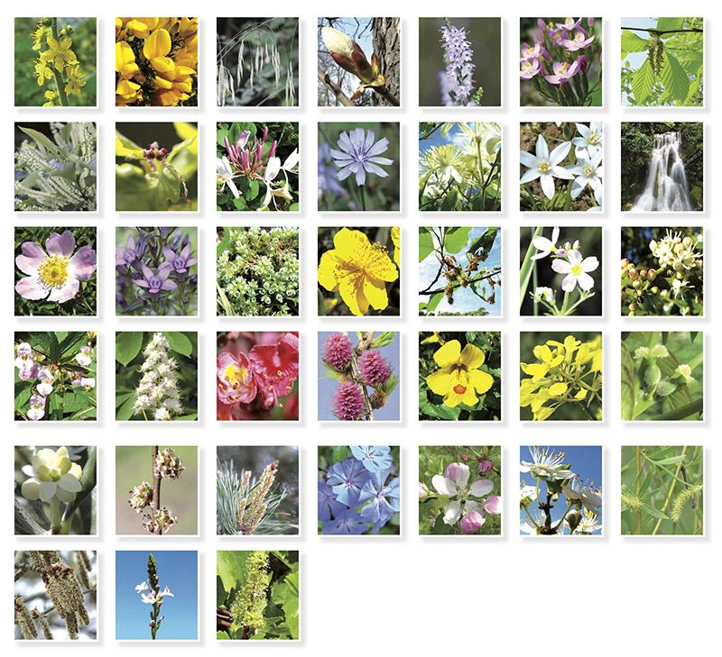 les 38 fleurs du docteur Bach, fleurs de Bach
